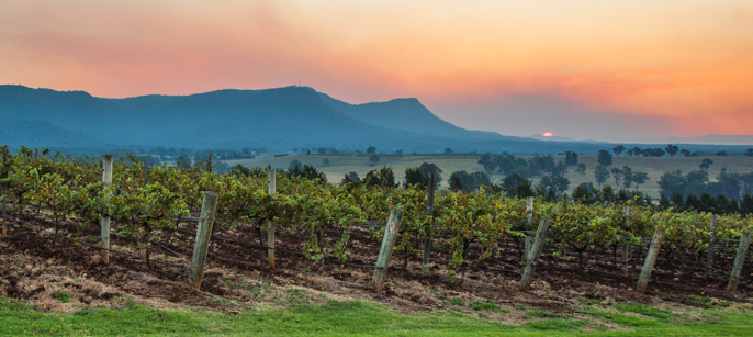 Hunter Valley Sunset